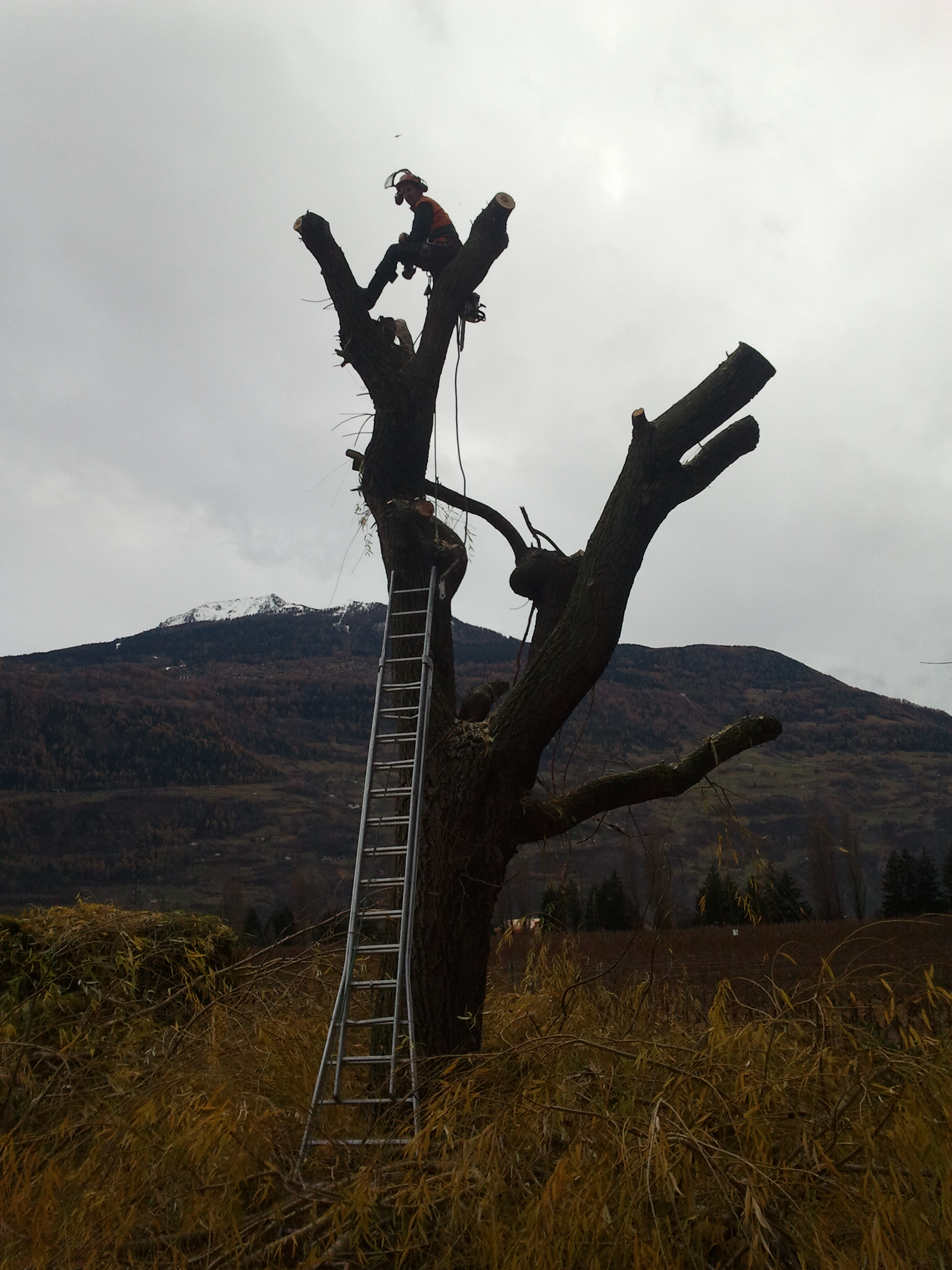 Taille d'arbres - Triage forestier du Vallon